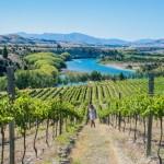 Explore Wanaka vineyards with Wanaka Wine Tours