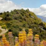 Millenium Track Wanaka - single track mountain biking tours with Wanaka's Southern Guides