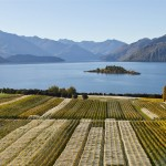 Enjoy the Rippon vineyard in Wanaka with Wanaka Wine Tours